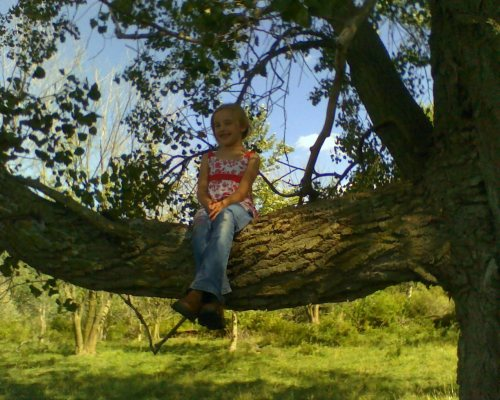 climbing tree in summer 1