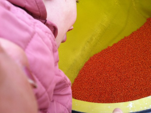 """""""Wow! The seed is so pretty!"""" Anna LOVES the color of pink!"""