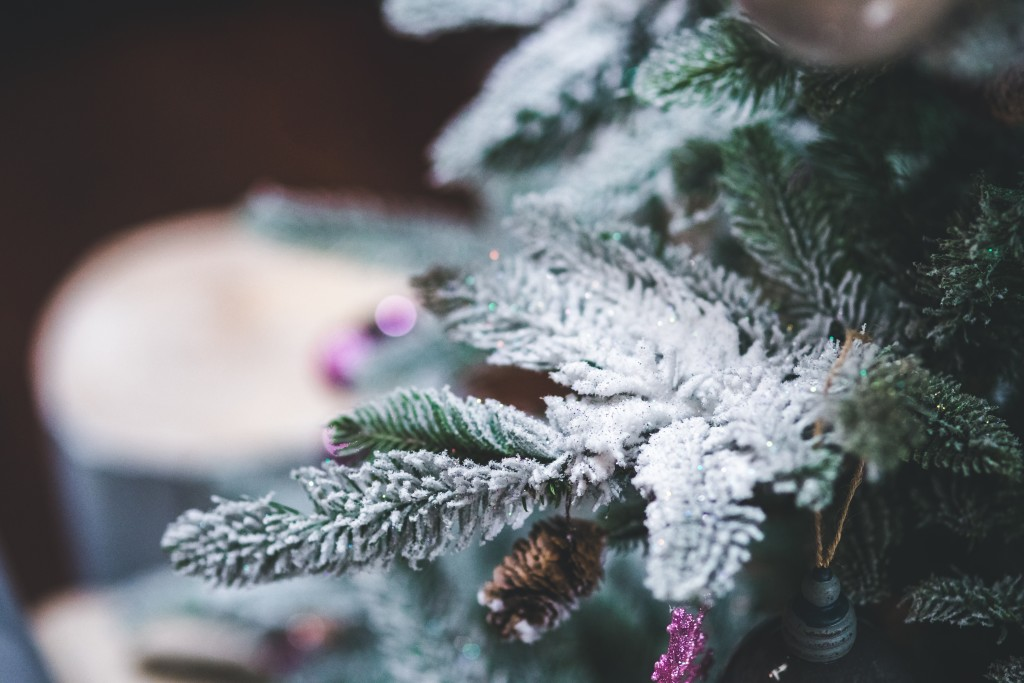 Unwrapping The Gift of God's Word at Christmas