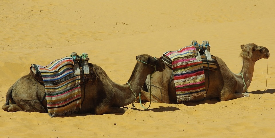 A a camel lays before his master... Corrie Ten Boom